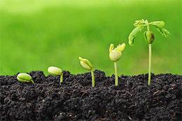 不愿发芽的豌豆