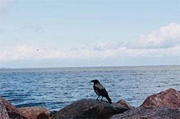 想看大海的小鸽子