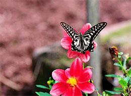 蝴蝶在读香喷喷的报纸