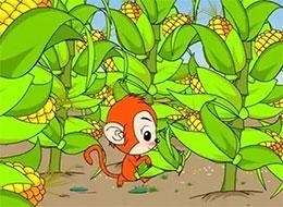 猴哥猴弟种玉米