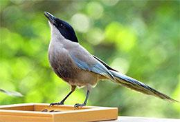 请一只鸟儿吃午餐