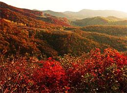 红叶的旅行