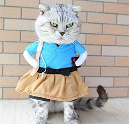 猫咪成衣店