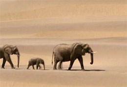 沙漠里的象妈妈