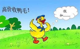 唐老鸭卖鸭毛