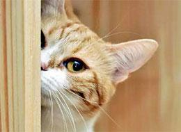 小黄猫的心愿