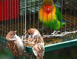 鹦鹉与麻雀