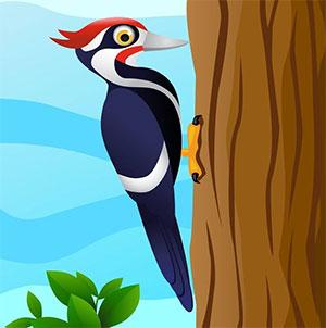 啄木鸟治病