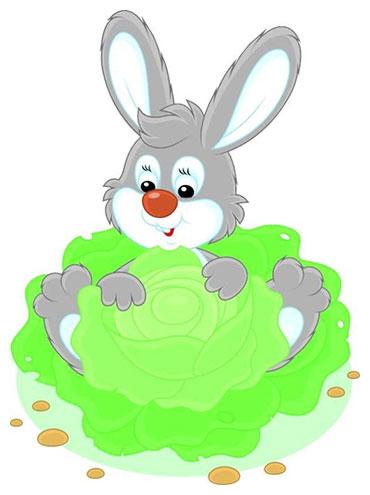 住在卷心菜里的兔子