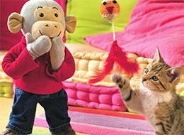 波比和小猫