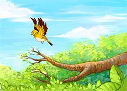 初次离开妈妈的黄鹂鸟