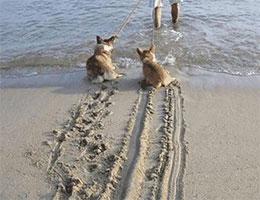 狗狗展示刹车ABS
