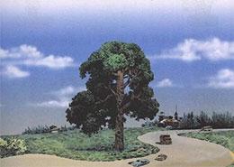 路旁的橡树