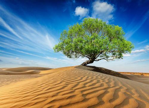 一棵旅行的树