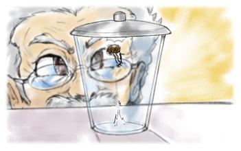 跳蚤与玻璃杯