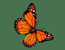 小蝴蝶看戏