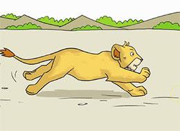 小狮子学捕猎