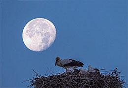 月亮照在鸟巢上