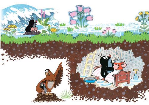 鼹鼠和小鸟宝宝(鼹鼠和老鹰)