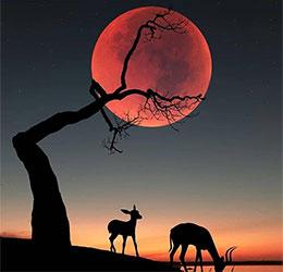 坐在树杈上的月亮