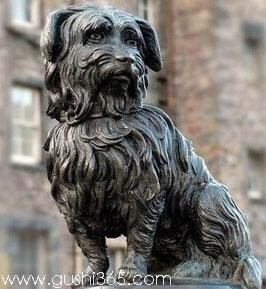 狗狗是人类最好的朋友 盘点十大忠犬