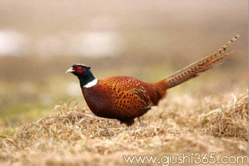 美丽的尾巴