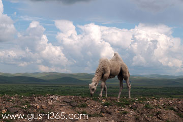 迷路的小骆驼