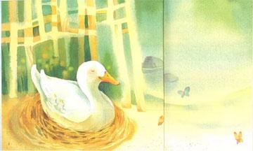 彩色的鸭子