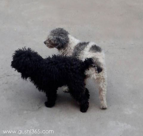 花狗和黑狗