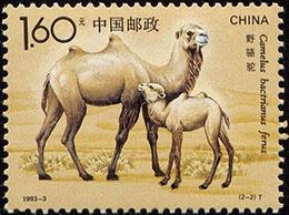 小骆驼问妈妈