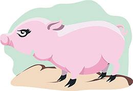 好奇的小粉猪