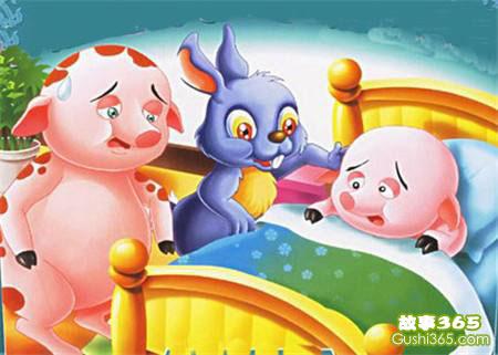 小猪胖胖生病了