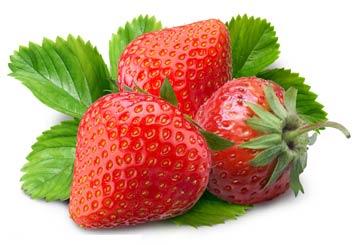 小熊种草莓