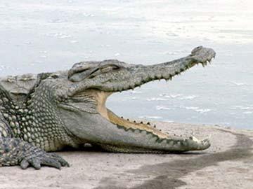 小鱷魚買牙刷