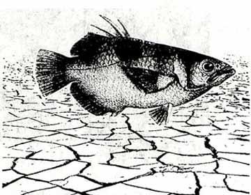 一条忍着不死的鱼