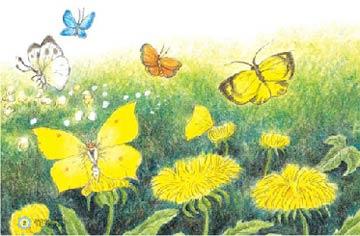 美麗的花蝴蝶