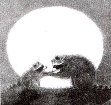 小浣熊:会亲吻的手