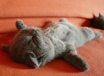小懒猫波奇