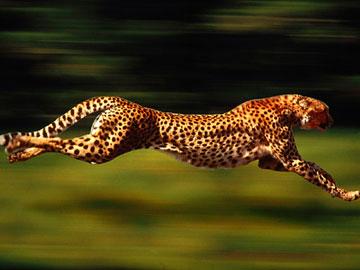 关于老虎和豹子的童话作文