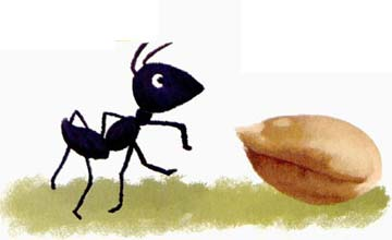 蚂蚁和麦粒
