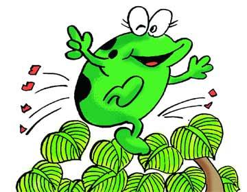 胖青蛙做妈妈