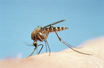 蚊子是人类头号杀手