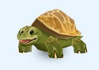 等待的乌龟