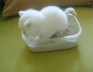 馋嘴的小猫