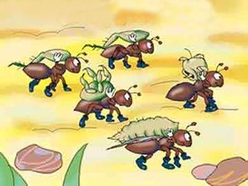 小蚂蚁运花粉