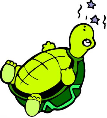 小乌龟晒太阳