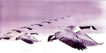 飞越喜马拉雅山的小雁