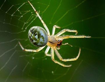 小蜘蛛的故事