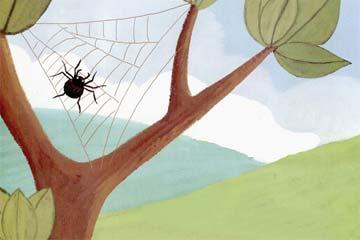 蜘蛛王国的比赛